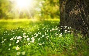 boomstam met bloemen langs