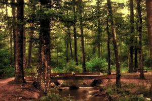 Bos met riviertje