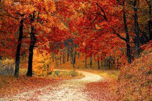 Pad door het bos. De bladeren van de bomen hebben herfstkleuren.