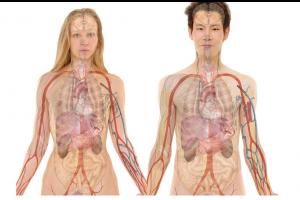 binnenkant van een lichaam