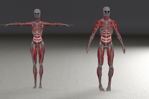 twee skeletten