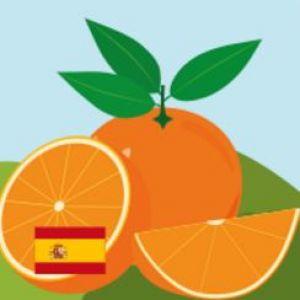 tekening van een sinaasappel