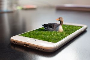 There is a virtual duck on the smartphone screen.