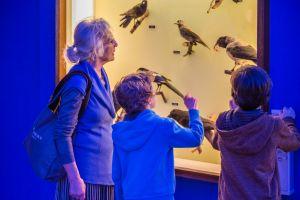 Bezoekers bekijken de opgezette vogels in de museumzaal