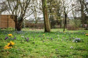 Een zicht op de museumtuin in de lente