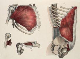 Anatomische tekening