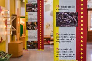 Een zicht op de museumzaal over paddenstoelen