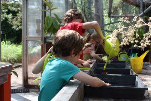 Kinderen zaaien in bakjes in de serre