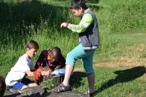 Leerlingen tijdens de workshop over bermen en graslanden