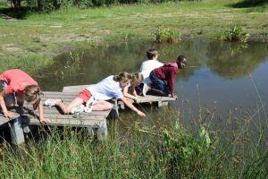 Leerlingen aan de schepvijver in het natuurgebied