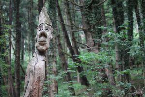 Boom met gezicht in bos