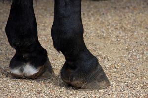 hoef van een paard