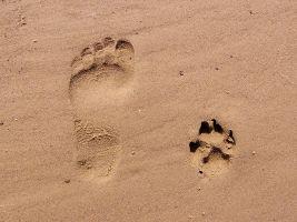voetsporen in zand