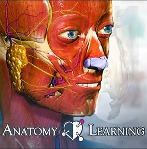 logo anatomy learning