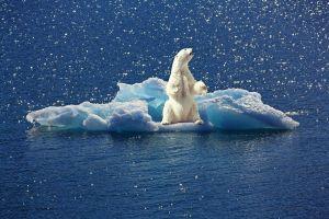 ijsbeer op een ijsschots