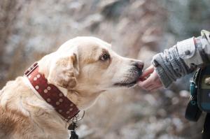 hond likt hand van kind