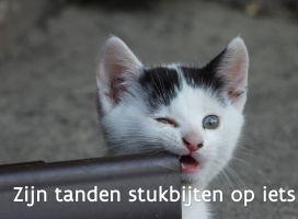 een kat die op iets bijt