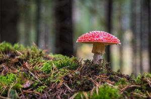 Autumn photo with fly agaric