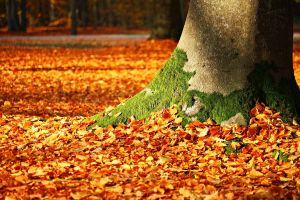 tree trunk with autumn leaves on the ground