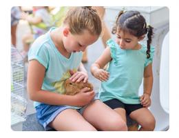 kinderen aaien een konijn