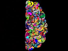 twee hersenhelften rechterhelft met kleuren