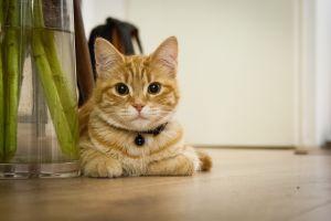Cat lying on floor