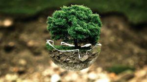 boom groeit uit halve wereldbol