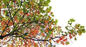 Foto van de top van een boom