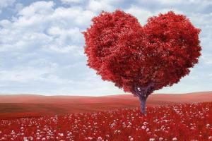 kruin van een boom in de vorm van een hart
