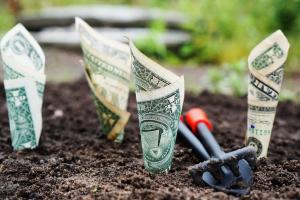bankbiljetten als plantjes uit de grond
