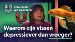 Waarom zijn vissen depressiever dan vroeger?