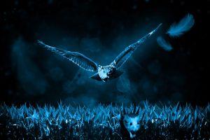 Uil in het donker