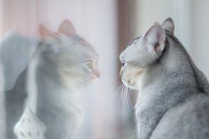 kat bekijkt zichzelf in de spiegel