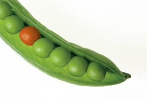 oranje erwtje tussen de groene in een peul