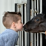 koe en jongen