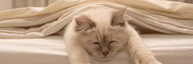 Kat luiert op bed