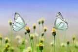 Tuin met vlinders