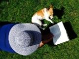 lezen op het gras in de zon