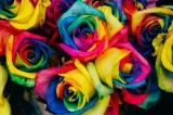 Rozen in kleuren van de regenboog.